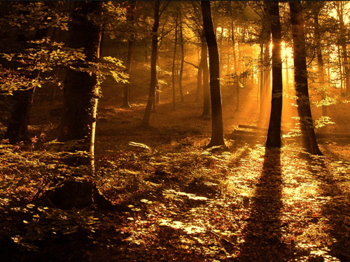 Sun ray in the woods 100 Absolutely Beautiful Nature Photography