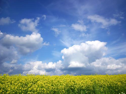 yellow field 100 Absolutely Beautiful Nature Photography